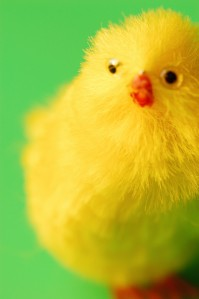 Toy Easter Chick