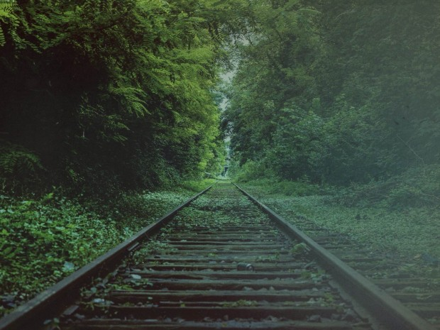 Tracks Through Forest Worship Background