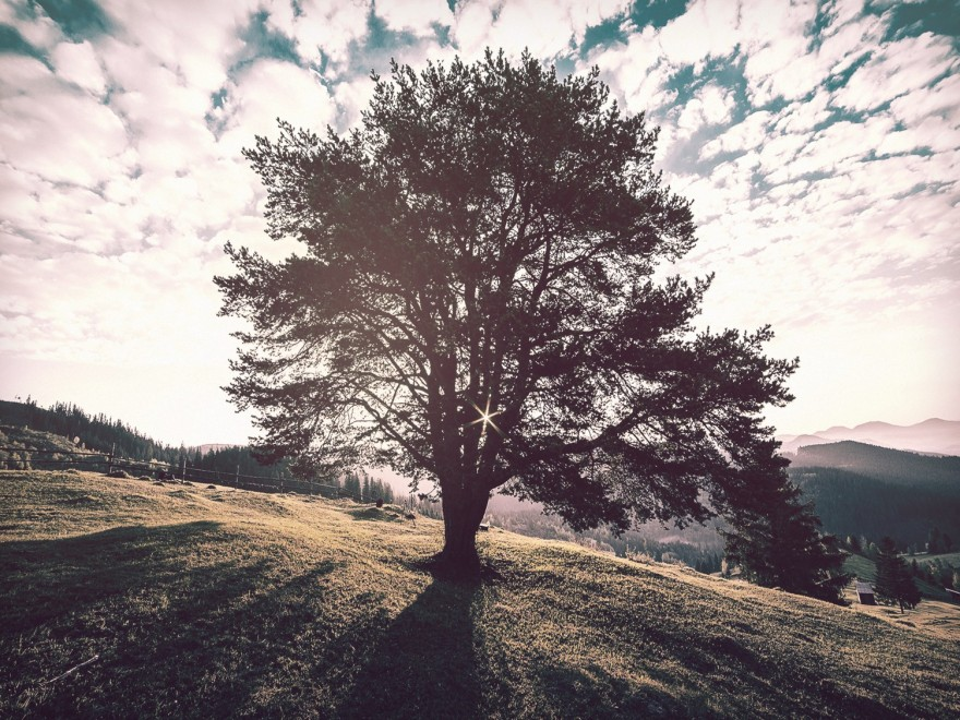 Tree on a Hill Church Worship Background